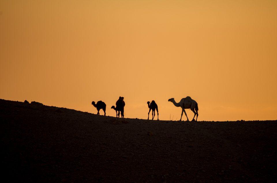 La Jordanie #2 – Préjugés et Découvertes