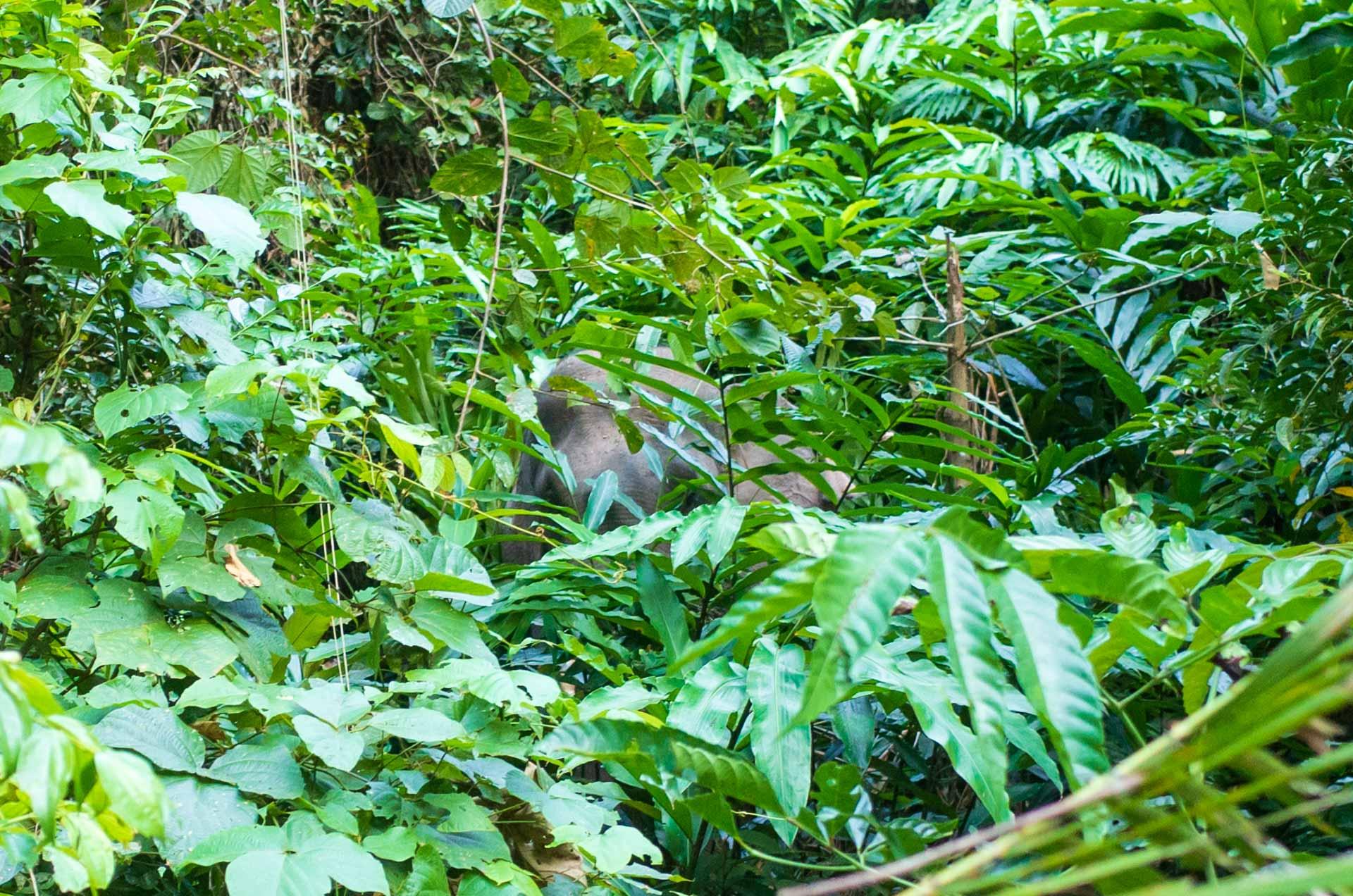 éléphant Parc Khao yai