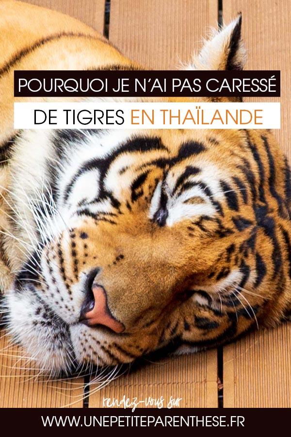 rencontre tigre thailande recherche site de rencontre sérieux et gratuit