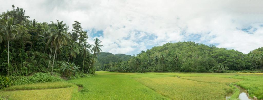 Pano-Bohol-Rizieres