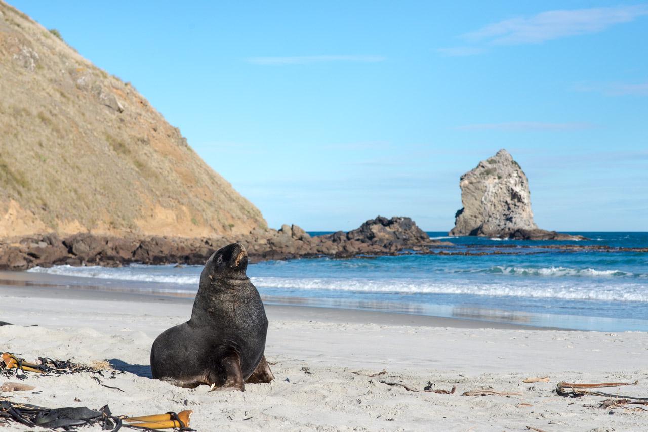 Nouvelle Zélande #10 : Dunedin et Péninsule de l'Otago