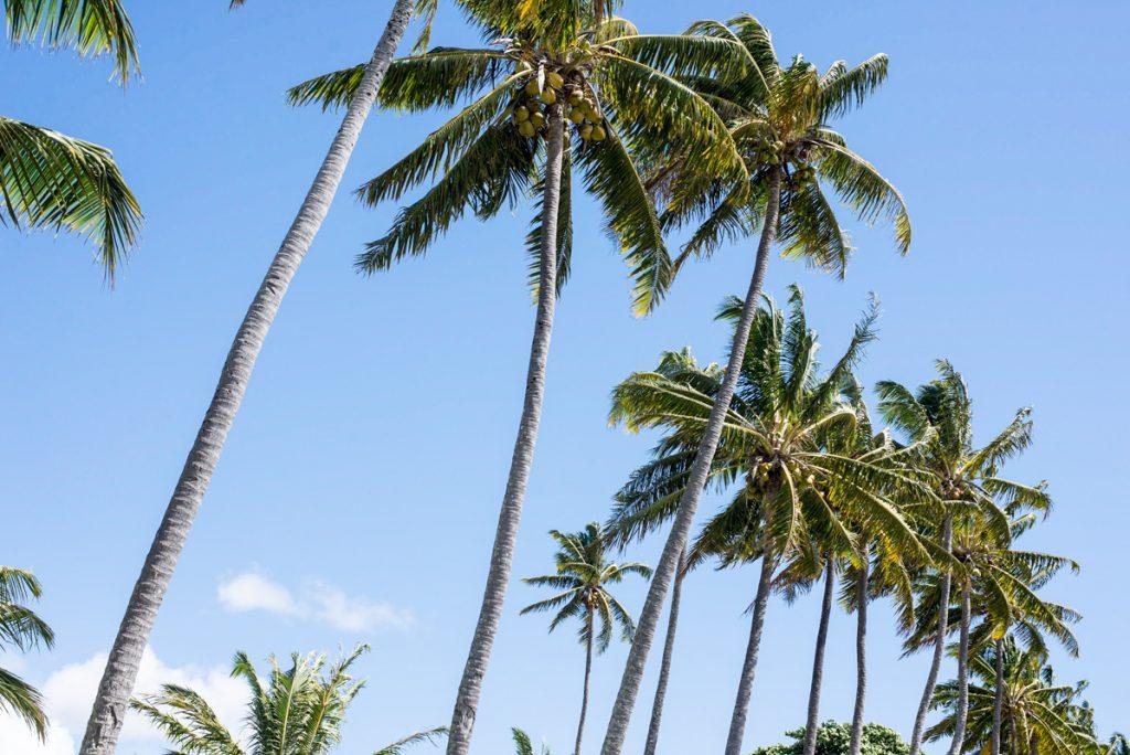 Bilan expatriation Nouvelle-Calédonie