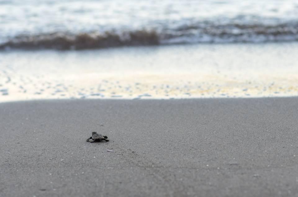 Turtle Watching à Poé : observer sans déranger