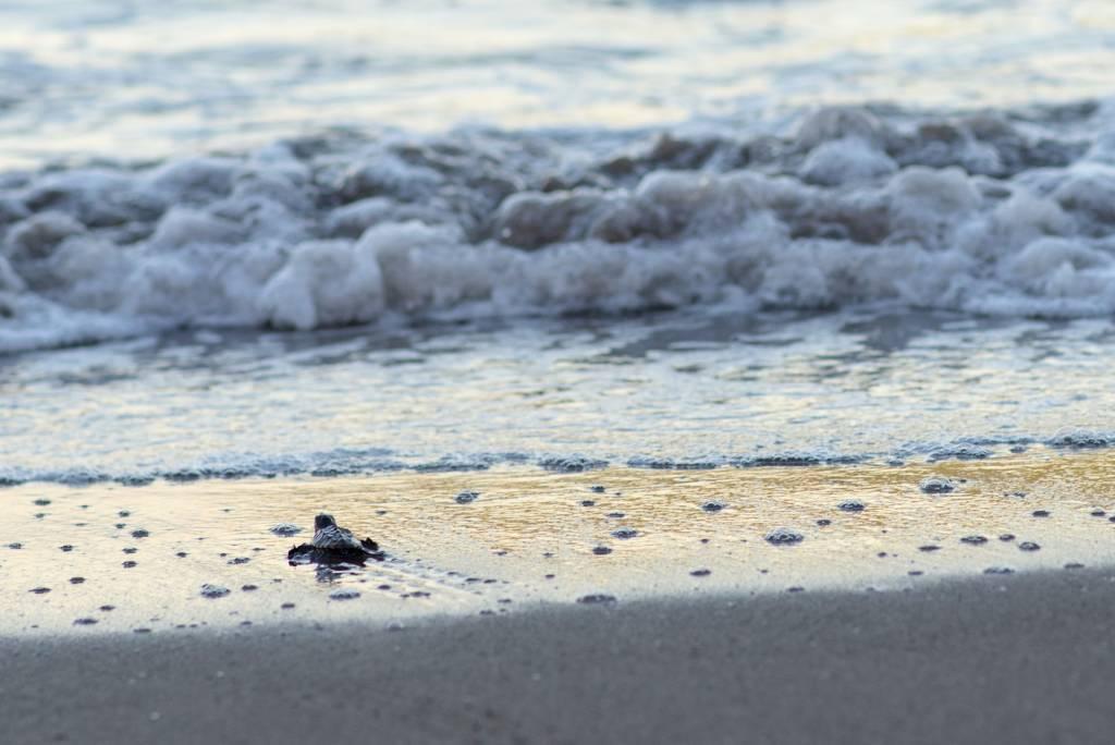 Observer les tortues Poé