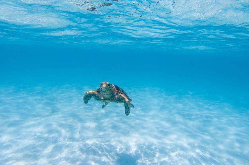 Une journée en mer à l'île des Pins