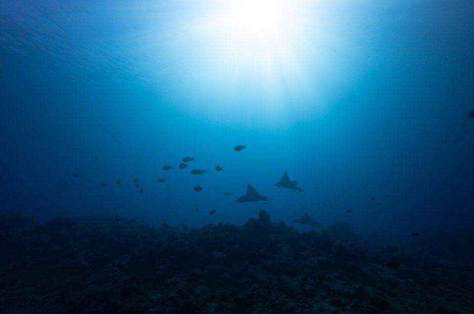 Plonger en Nouvelle-Calédonie : où plonger et quoi voir ?