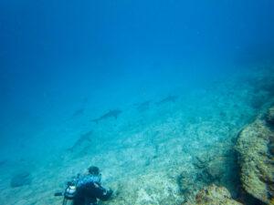 requin nouvelle-calédonie