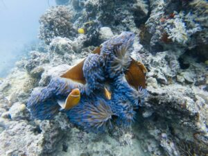 plonger en nouvelle-calédonie