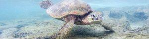 Philippines : Nager avec des tortues à Apo Island