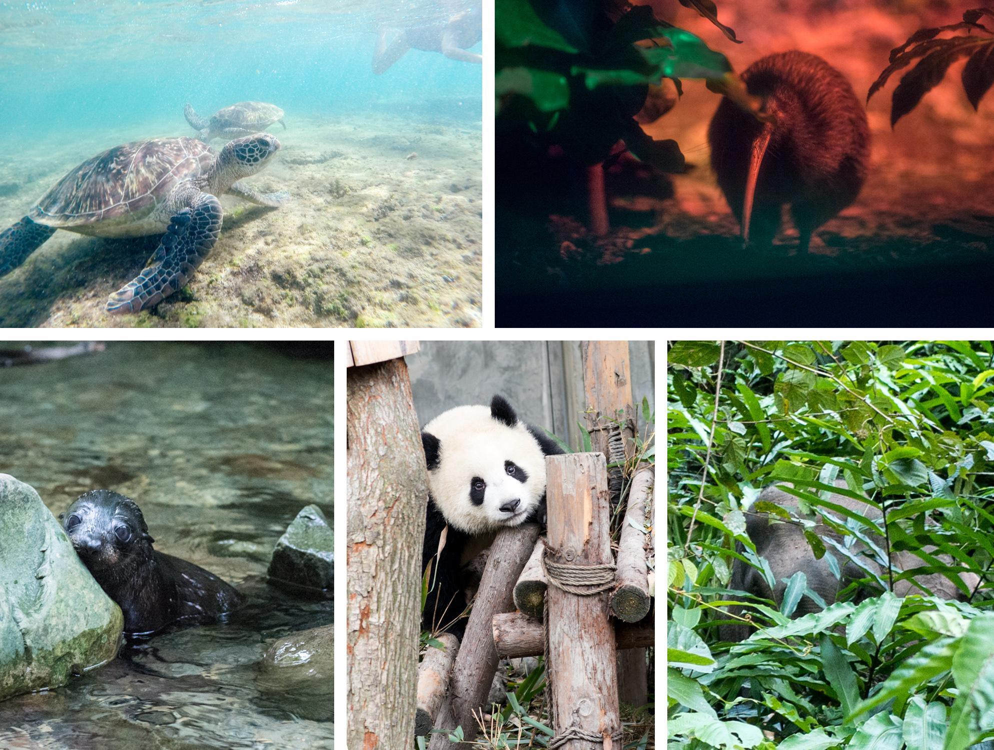 Top des animaux en tour du monde