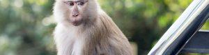 Visite du parc national de Khao Yai